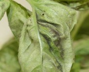 moldyplant-300x241